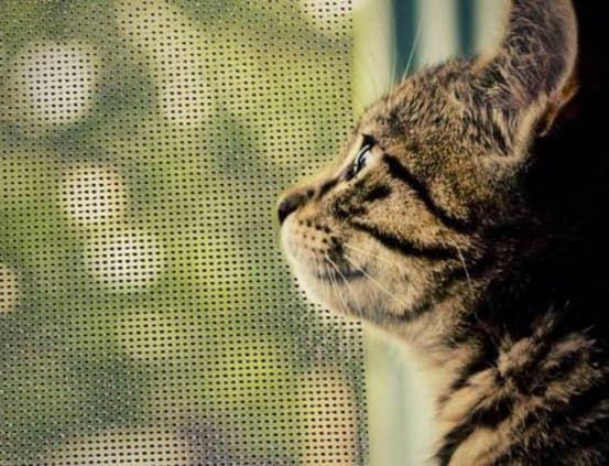 """Москитная сетка """"антикошка"""" для окон из дерева"""