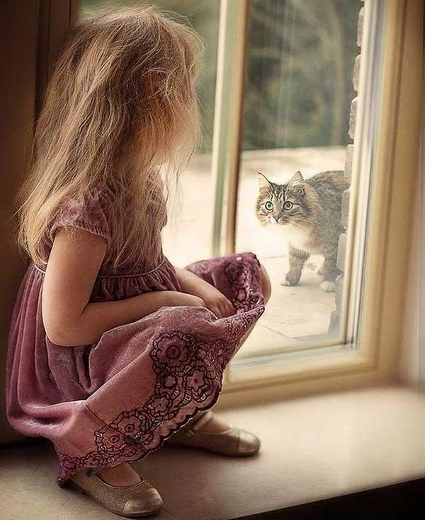 Благодарность окна