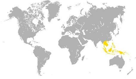 карта произростания меранти
