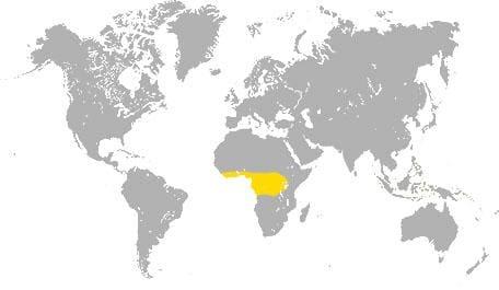 Карта сапеле